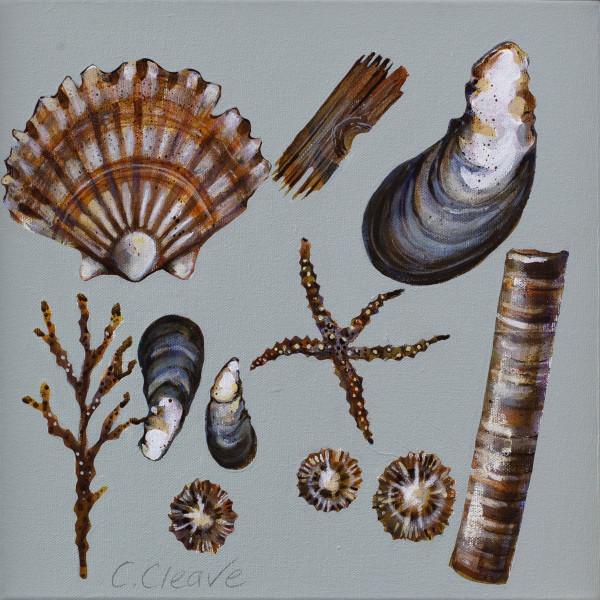 Caroline Cleave, Mussels IV