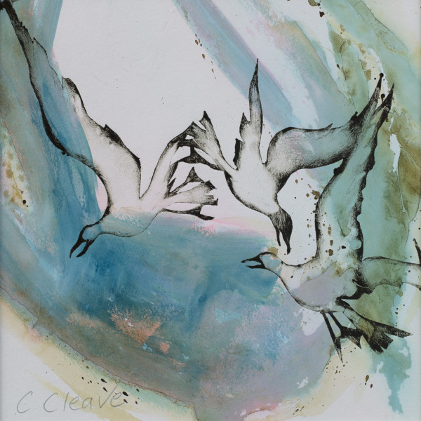 Caroline Cleave, Seagulls