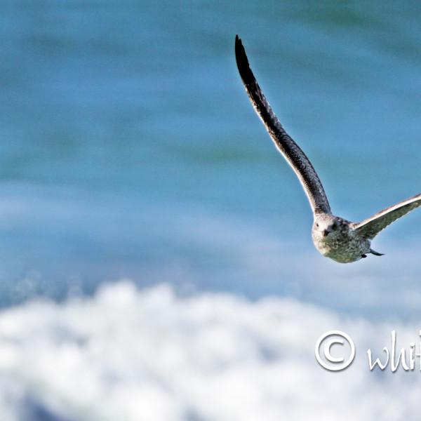 Nick Wapshott, Flight