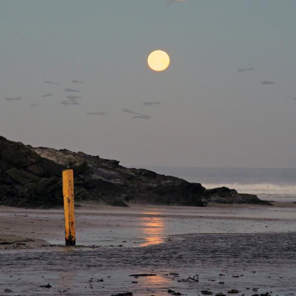 Nick Wapshott, Moon Falling