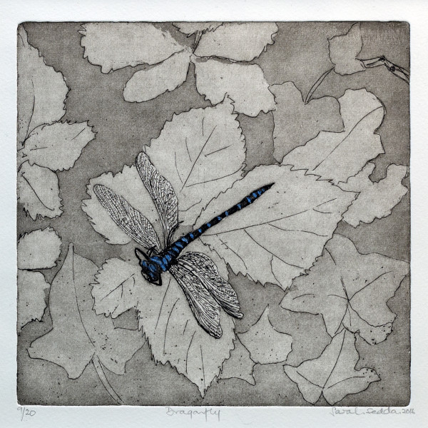 Sarah Seddon, Dragonfly Etched Background