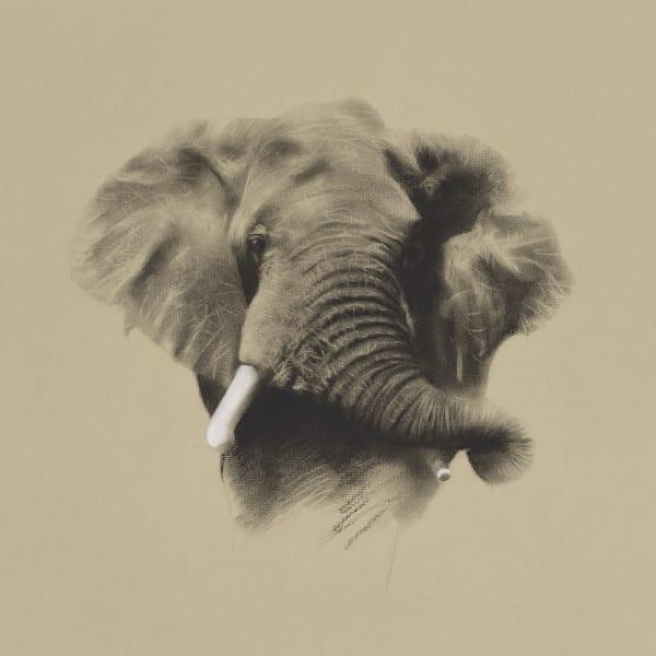 John Green - African Bull Elephant