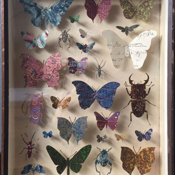 Helen Ward - Entomology Case 5, 2018