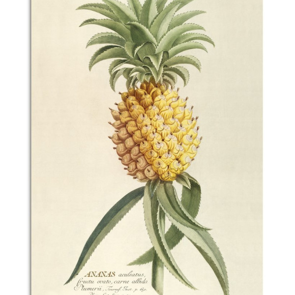 Unframed Prints - Ananas 3700