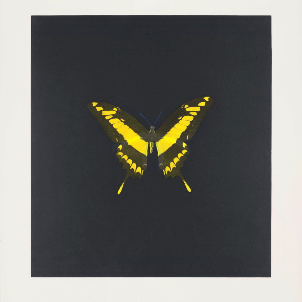 Damien Hirst, The Souls on Jacobs Ladder Take Their Flight (Small Yellow), 2007
