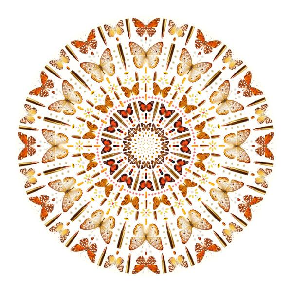 Iain Cadby, Autumn Mandala (White), 2019