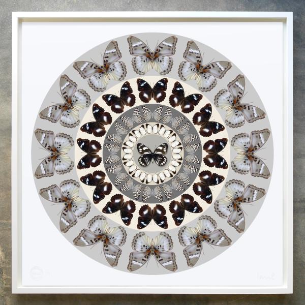 Iain Cadby, Target Mandala (Ash Grey), 2020