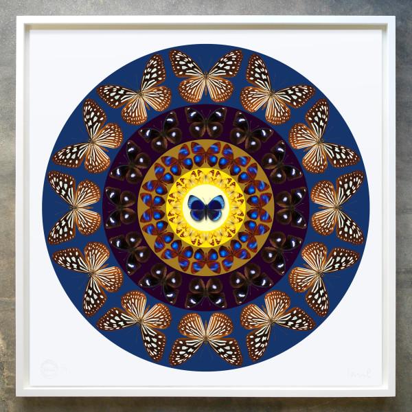 Iain Cadby, Target Mandala (Dark Violet Blue), 2020