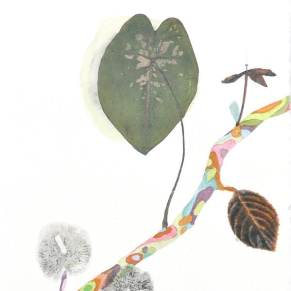 Marilla Palmer - Up Leaf and Shadow Spores