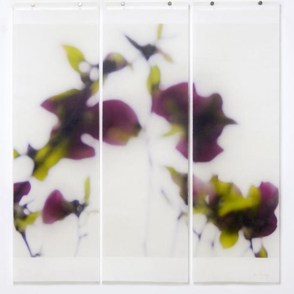 Jeri Eisenberg - Dark Magnolia, 2016