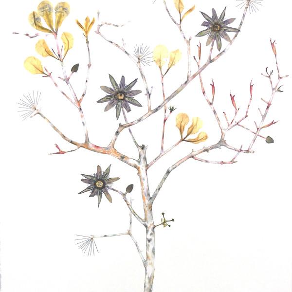 Marilla Palmer - Passionflower, Iris and Bee Balm