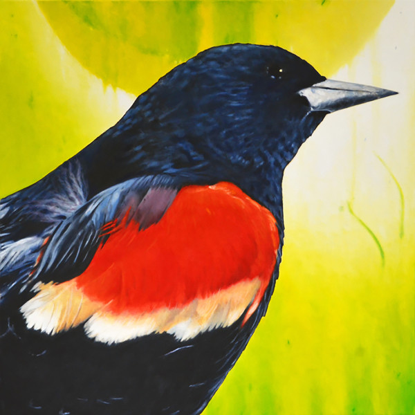 Michael Haykin - Red-Winged Blackbird