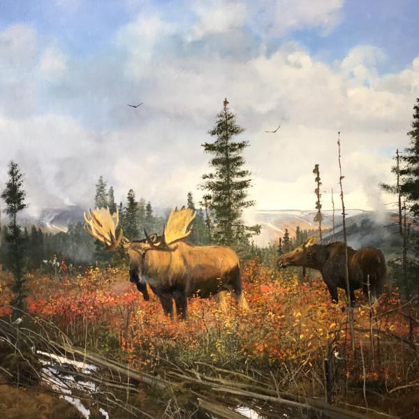 Michael Coleman - Yellowstone Moose