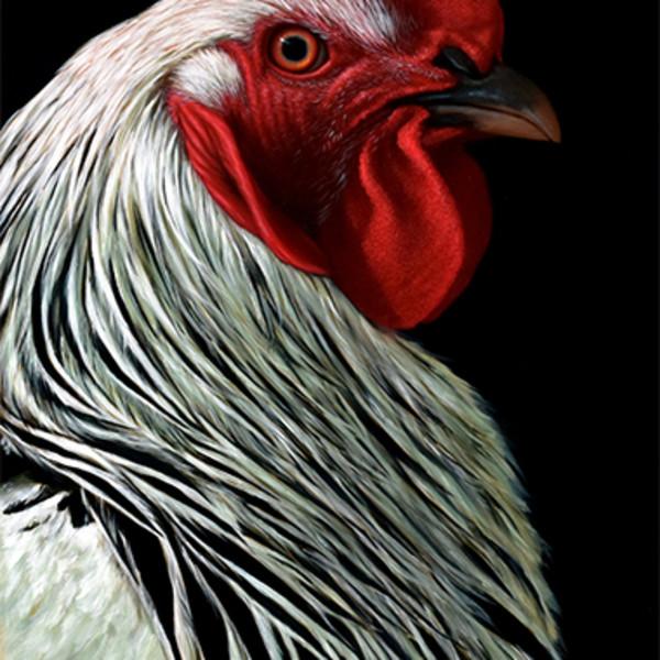 Alexandra Klimas: Farm Animals