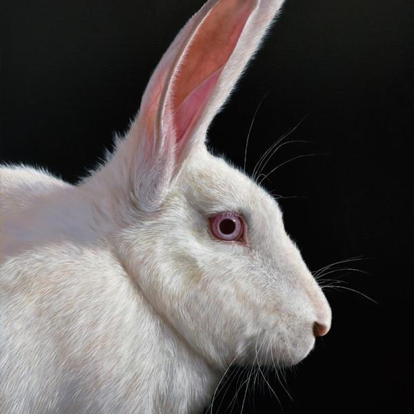 Alexandra Klimas - Snowy the Rabbit, 2018