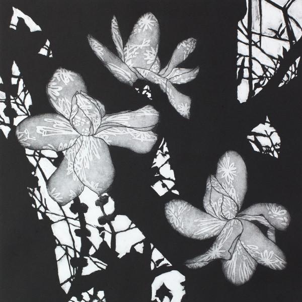 Sally Spens, Shadow Flowers 1
