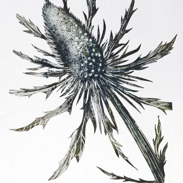 Caroline Cleave, Sea Holly