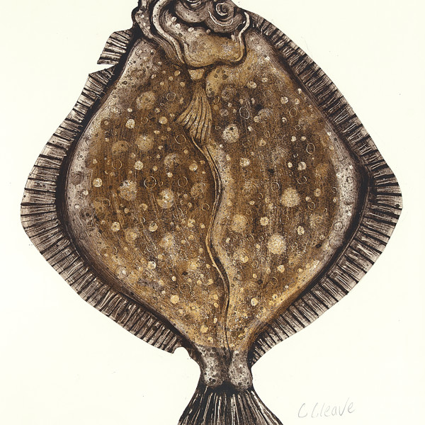 "Caroline Cleave, Turbot ""King of the Sea"""