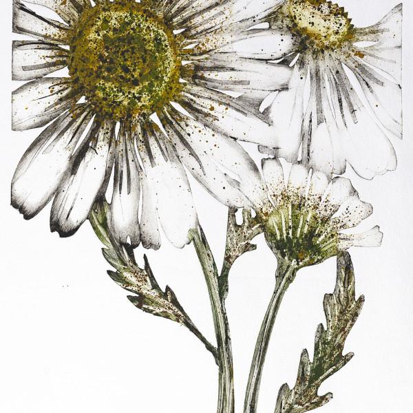 Caroline Cleave, Flower