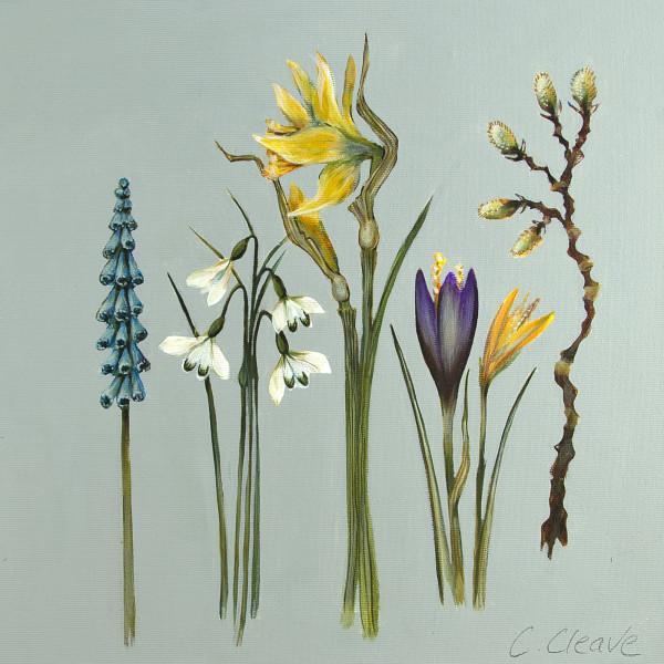 Caroline Cleave, Spring Flowers II