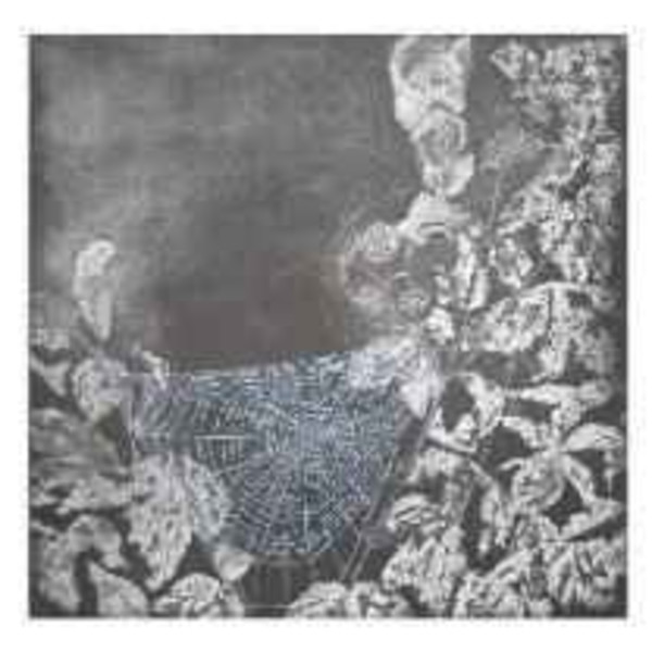 Sarah Seddon, The Webs We Weave