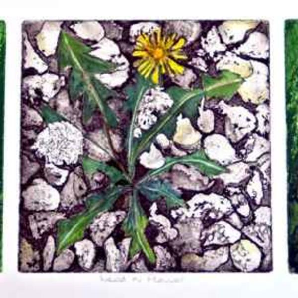Sarah Seddon, Weeds and Flowers Three Coloured Plates