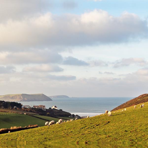 Nick Wapshott, Headlands