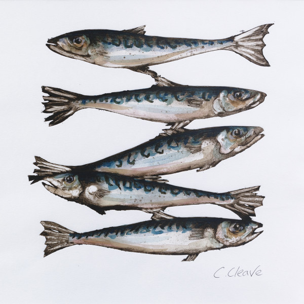 Caroline Cleave, Five Mackerel