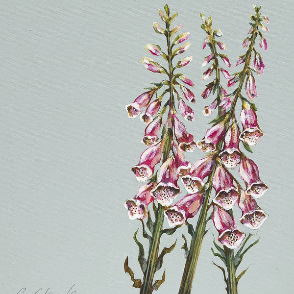 Caroline Cleave, Foxgloves
