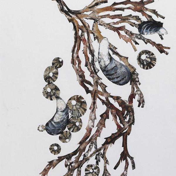 Caroline Cleave, Seaweed