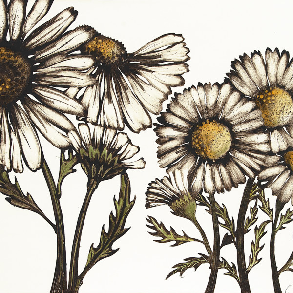 Caroline Cleave, Large Daisies