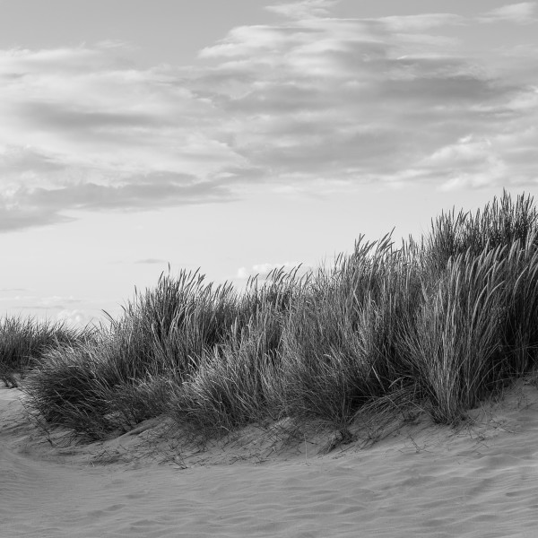 Nick Reader, Dunes at Rock