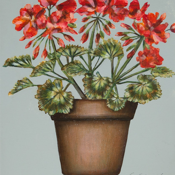Caroline Cleave, Geraniums