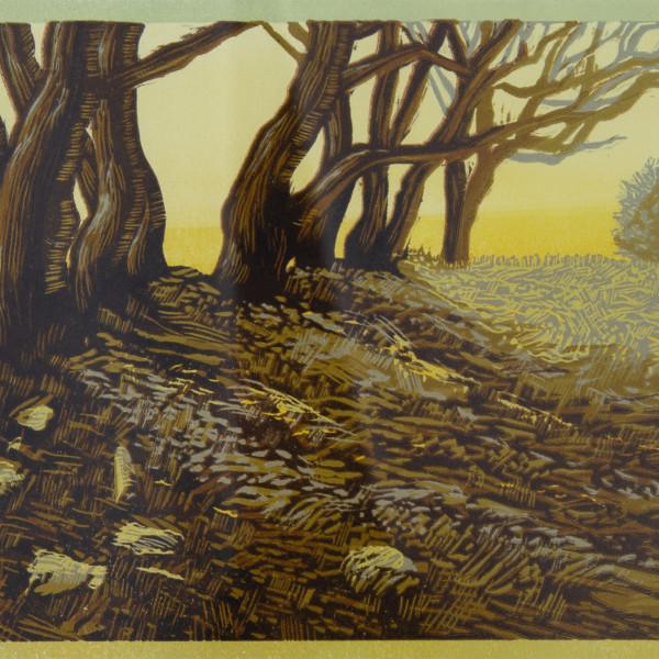 Peter Ursem, Old Trees