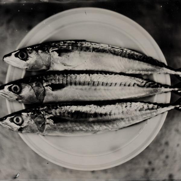 Nick Reader, Three Mackerel on a Plate