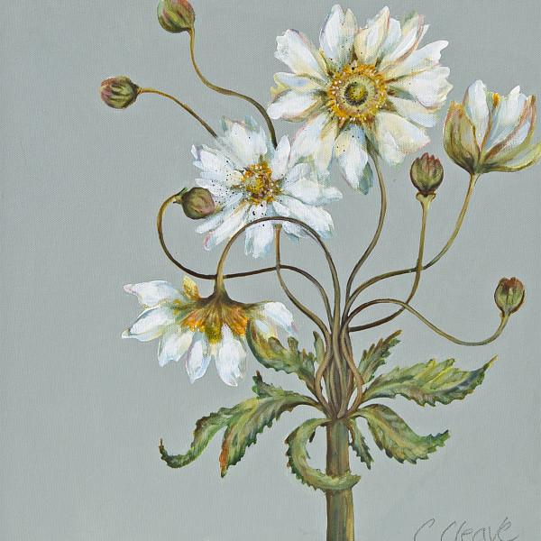 Caroline Cleave, Japanese Anemone