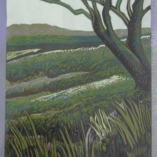 Peter Ursem, Dartmoor - Single Tree