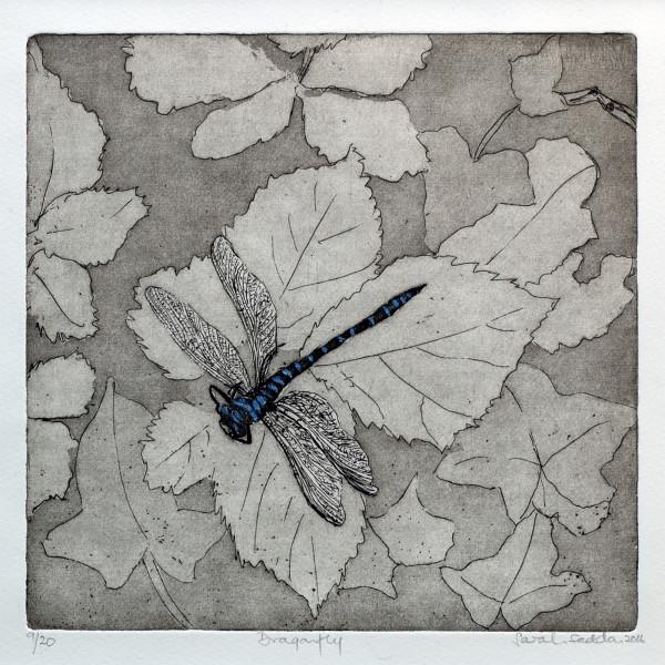 Sarah Seddon, Dragonfly Etched Background