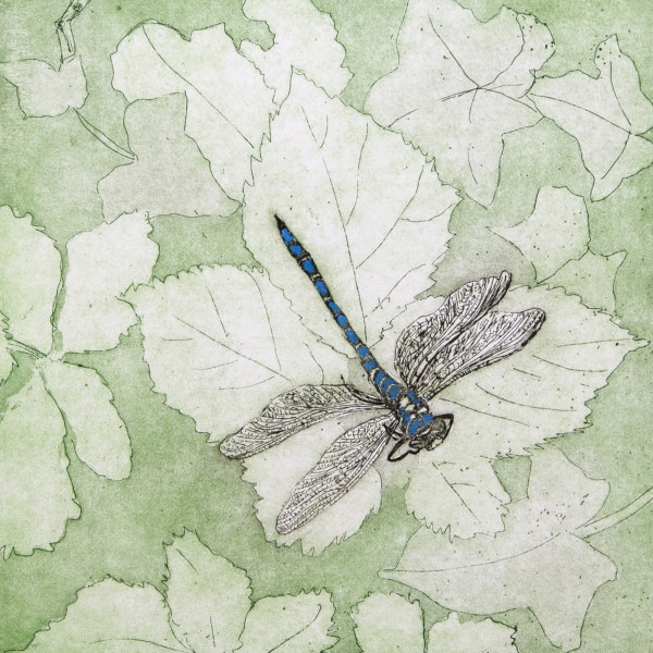 Sarah Seddon, Dragonfly Hand Painted Green Background