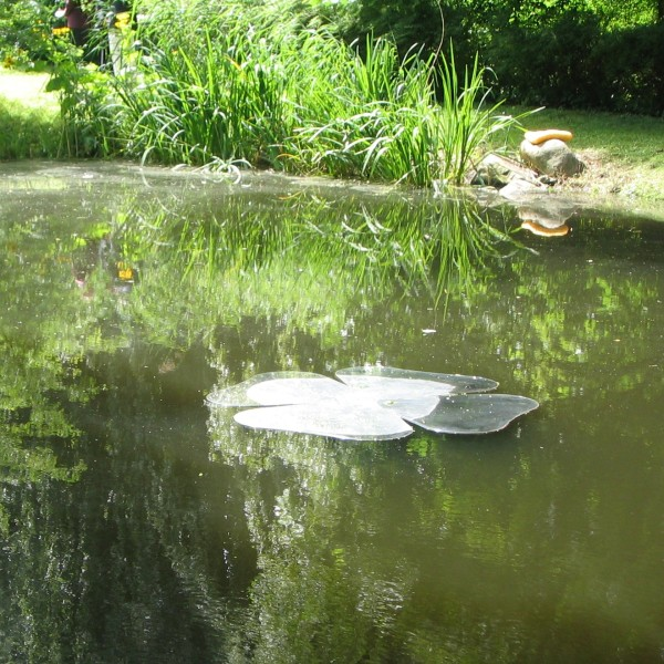Katsuhito Nishikawa. Floating Cloving