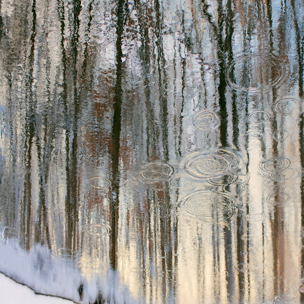 """Kate Cordsen's """"Ravine 1"""" C-type print with shades of brown, gray, white and blue. The print is of trees in a winter setting that looks to be seen from a water reflection. There are also droplets that leans more on realism than abstraction."""