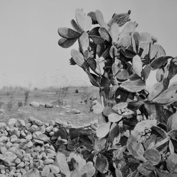 Samah Shihadi: Hungry for Home with accompanying text by Ranya Tabari Idliby