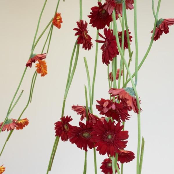 26.10.2019 - Anya Gallaccio: Artist Talk, Kyoto University of Art and Design