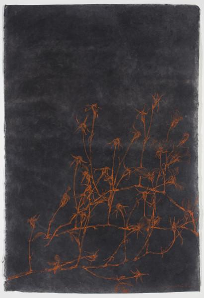 Sarah Horowitz, Vermillion Roses, 2013