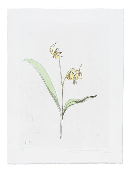 Sarah Horowitz, Glacier Lily, 2016