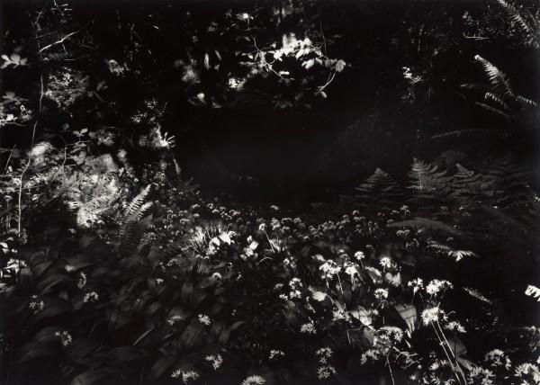 Thomas Joshua Cooper, Remembering lost holidays - Wild garlic in flower - The River Devon - Rumbling Bridge Gorge, Kinross-shire, Scotland, 2014