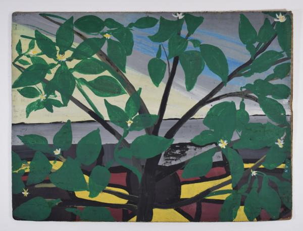 Frank Walter, Tropical Plant