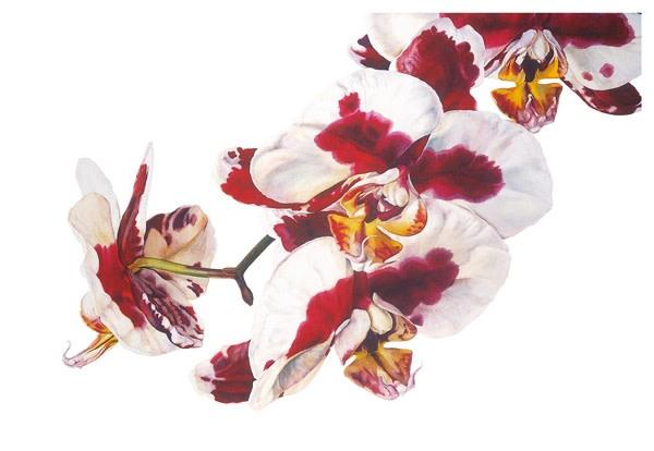 Rosie Sanders, Phalaenopsis - Elegant Polka Dots