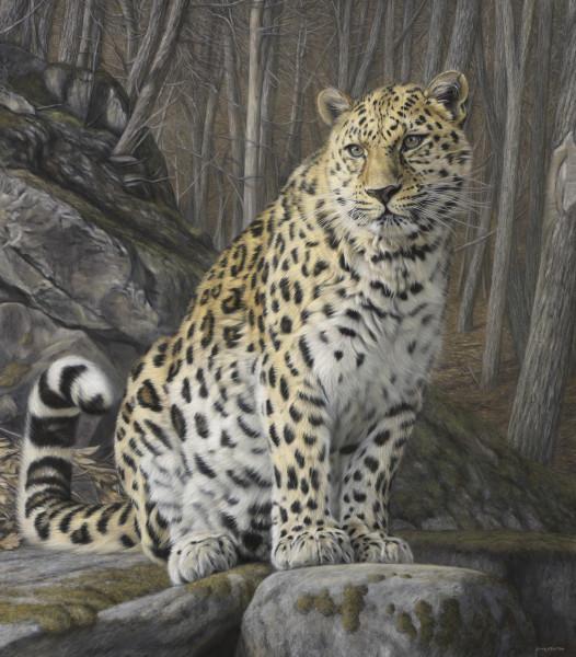 Gary Stinton, Sitting Amur Leopard