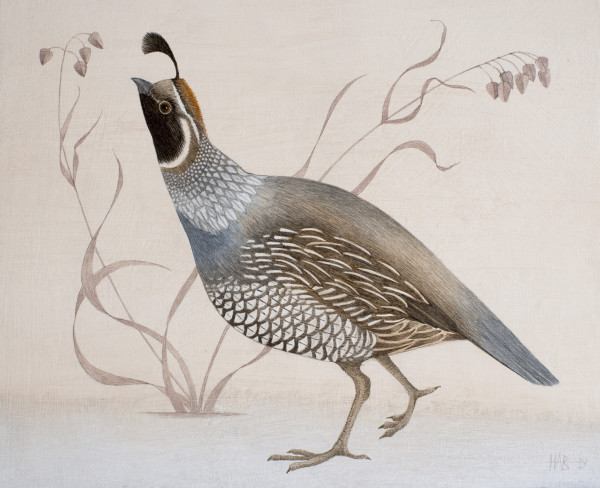 Harriet Bane, Californian Quail